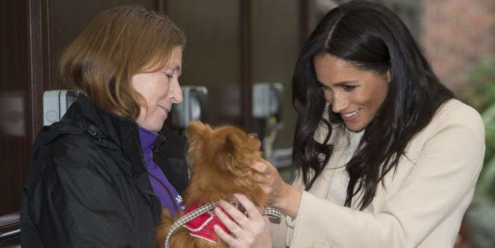 Meghan Markle Is Assisting an Animal well-being Charity Financially Struggling in the center of the widespread infection