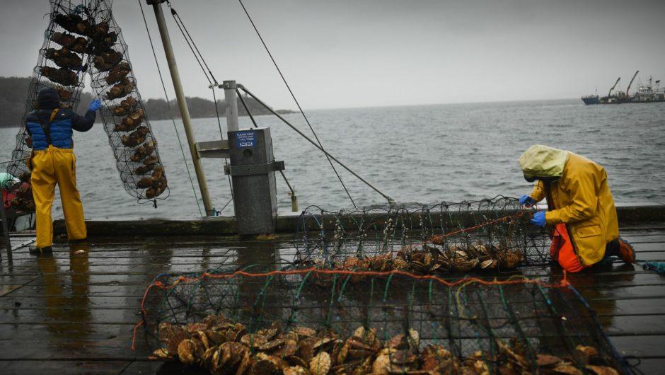 As Brexit Jams EU exports, Scottish Fishermen sail to Denmark